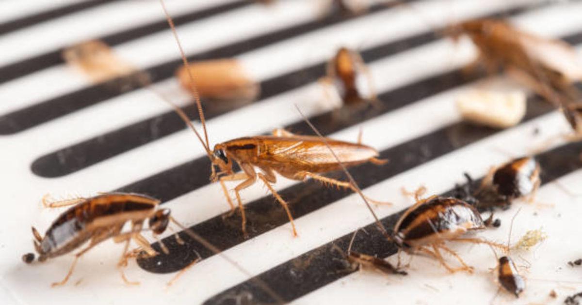 Kakkerlakkenbestrijding Dordrecht